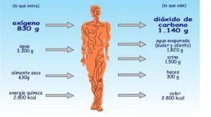 trucos-para-acelerar-tu-metabolismo