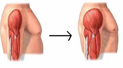 ejemplo-de-dieta-para-ganar-masa-muscular