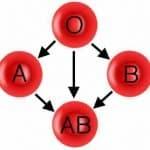 La dieta del grupo sanguíneo