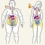 Grasa marrón o grasa parda: Una grasa que adelgaza