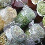 Alimentos germinados. Cómo hacerlos en casa
