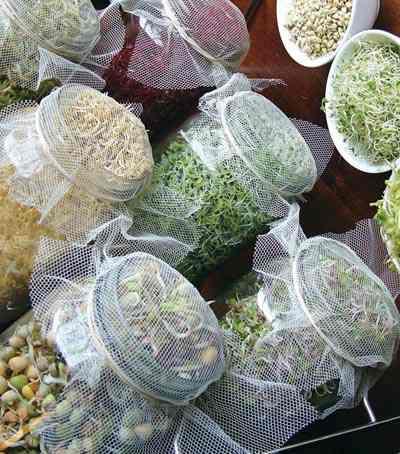 como-hacer-alimentos-germinados