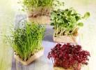 alimentos-germinados-propiedades-beneficios