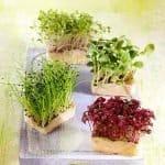 Alimentos germinados. Beneficios y propiedades