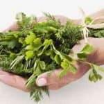 Las 8 mejores plantas medicinales para bajar de peso