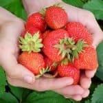 Propiedades de las fresas beneficiosas para tu salud