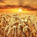 dieta-equilibrada-granos-cereales