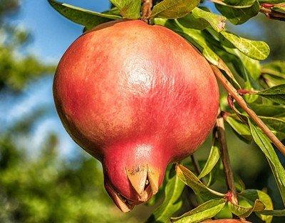 alimentos-organicos-ecologicos