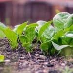 alimentos-ecologicos