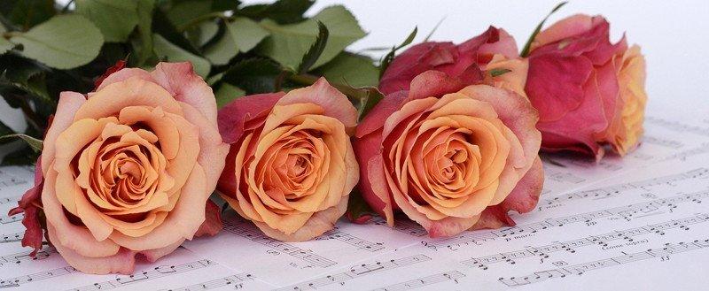 regalar-flores-rosas
