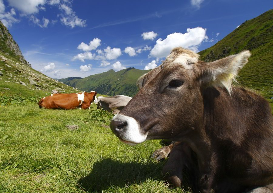 leche-ecologica
